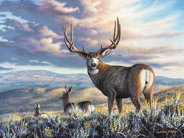 "Mule Deer Buck Canvas Art Print - ""The Inspiration"""