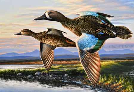 "2017 Duck Stamp Painting Art Print - ""Red Rock Blue-wings"""