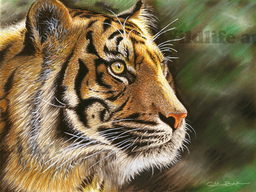 "Tiger Canvas Art Print - ""Into The Jungle"" - art print - original art - Wildlife and Art by Chuck Black"