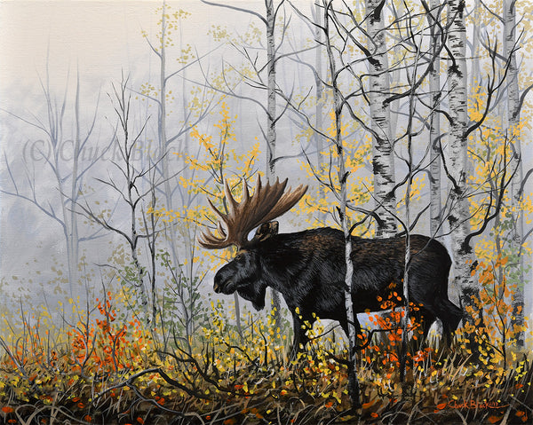 "Bull Moose Canvas Wildlife Art Print - ""Rare Moments"""