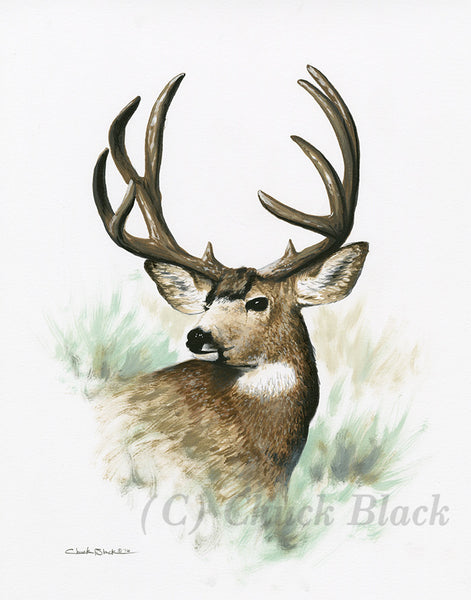 "Mule Deer Limited Edition Print - ""The Man"""