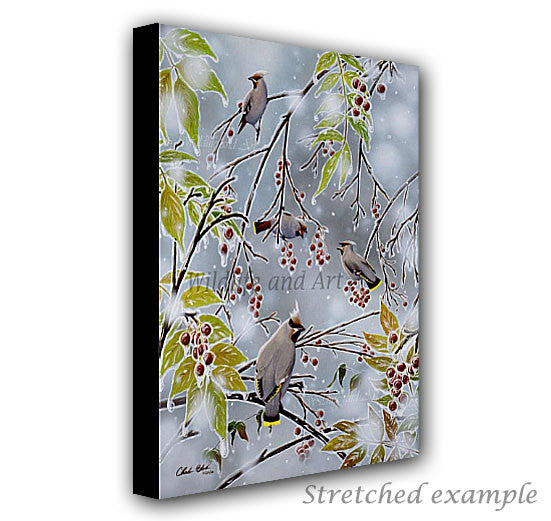 wildlife art canvas print - waxwing painting - chuck black artist