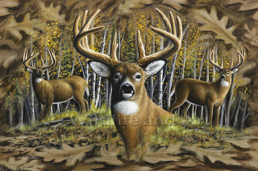 "Whitetail Deer Canvas Art Print - ""Whitetail Country"" - art print - original art - Wildlife and Art by Chuck Black"