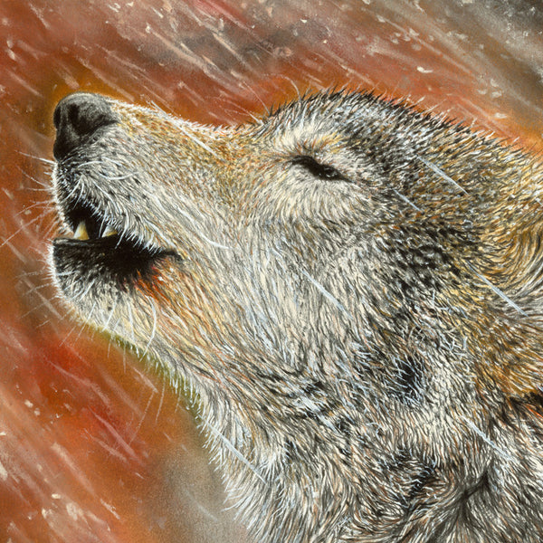 wildlife art - wolf artwork - chuck black