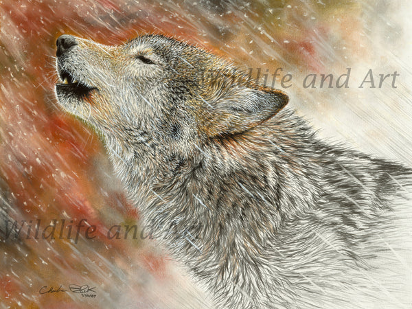 "Howling Wolf Canvas Art Print - ""Winter's First Call"" - art print - original art - Wildlife and Art by Chuck Black"