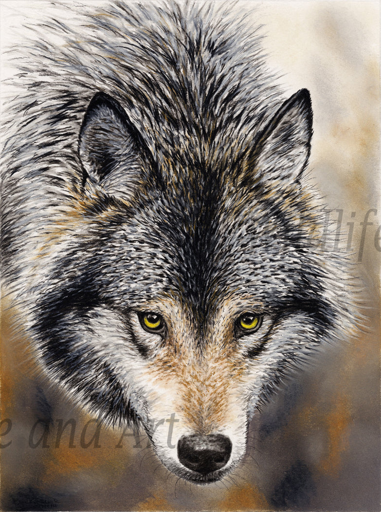 "Timber Wolf Canvas Art Print - ""Nature's Beauty"" - art print - original art - Wildlife and Art by Chuck Black"