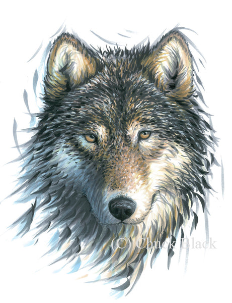 "Timber Wolf Limited Edition Print - ""With The Wind"" - art print - original art - Wildlife and Art by Chuck Black"