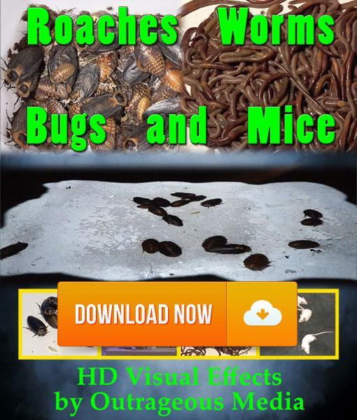 Roaches, Worms, Bugs & Mice - Projection Effect - Digital Download