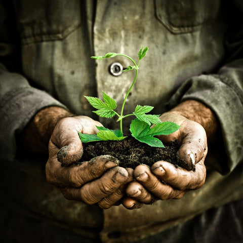 Man Holding black dirt in hands with a plant growing