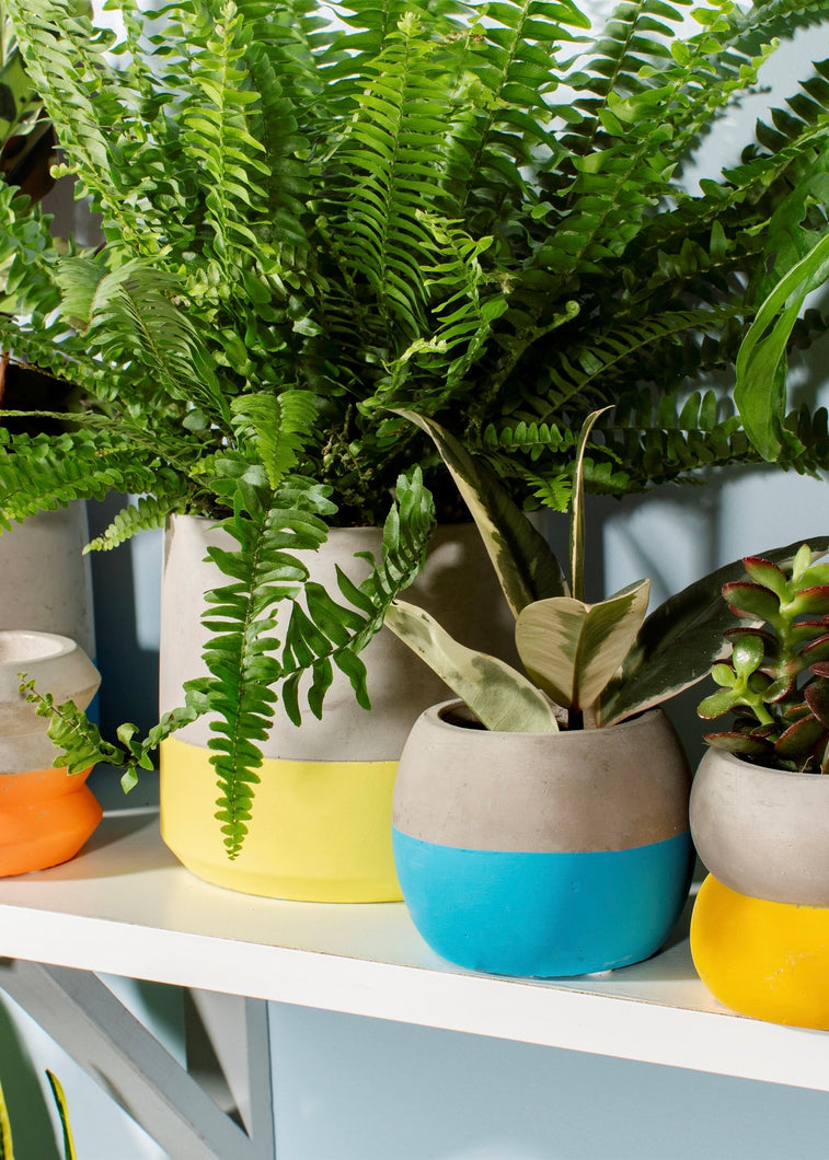 Colour Blocked Cement Planters Small - 3 Colours
