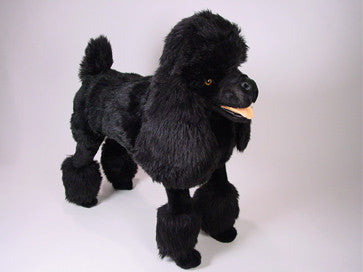 """Charley"" Poodle"