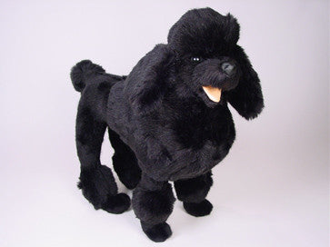 """Peabody"" Poodle"