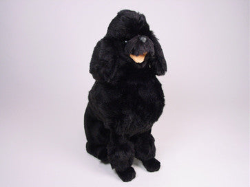 """Dilly"" Poodle"