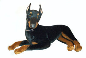 """Thunder"" Doberman Pinscher"