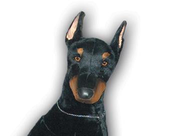 """Alpha"" Doberman Pinscher"