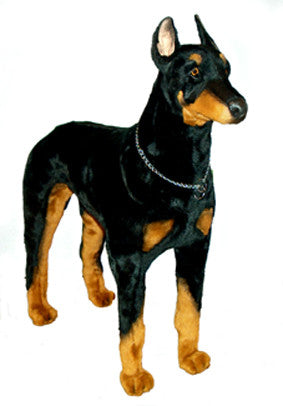 """Apollo"" Doberman Pinscher"
