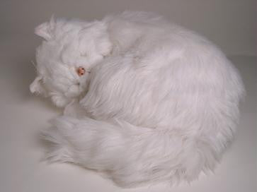 """Bashful"" White Persian"