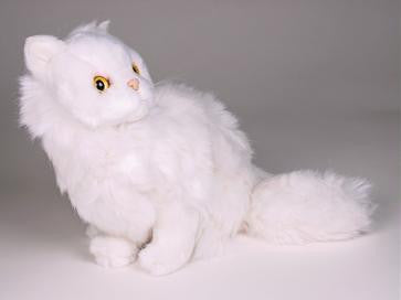 """Sugar"" White Persian"
