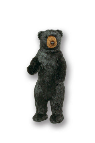"""Little Wally"" Black Bear"