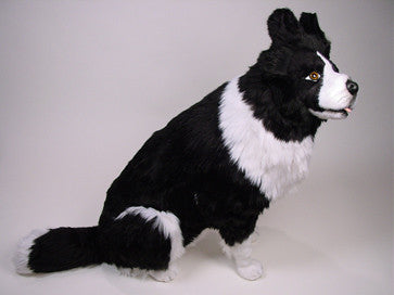 """Old Hemp"" Border Collie"
