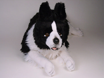 """Noble"" Border Collie"