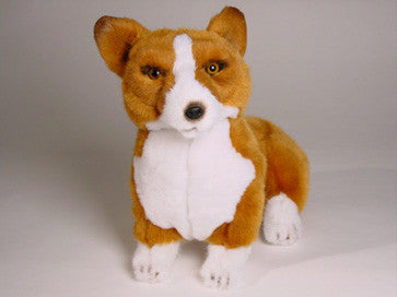 """Swift"" Pembroke Welsh Corgi"