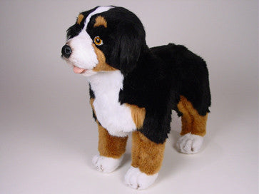 """Shep"" Bernese Mountain Dog"