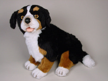 """Blass"" Bernese Mountain Dog"