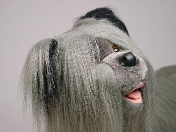 """Feisty"" Skye Terrier"