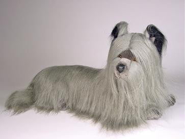 """Allie"" Skye Terrier"