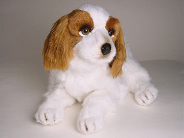 """Windsor"" Cavalier King Charles Spaniel"