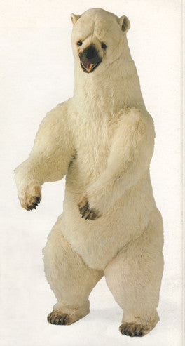"""Sam"" Polar Bear"
