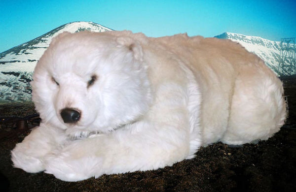 """Franka"" Polar Bear"