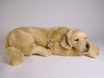"""Walden"" Golden Retriever"
