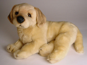 """Conan"" Golden Retriever"