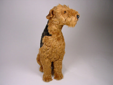 """Duke"" Airedale Terrier"