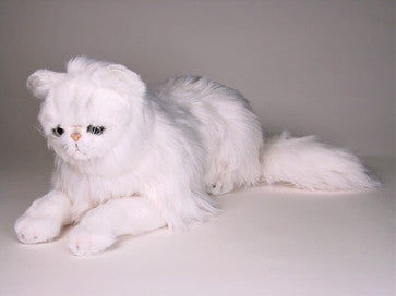 """Mr. Tinkles"" Chinchilla Persian"