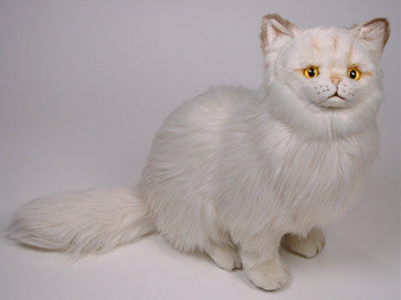 """Crookshanks"" Chinchilla Persian"