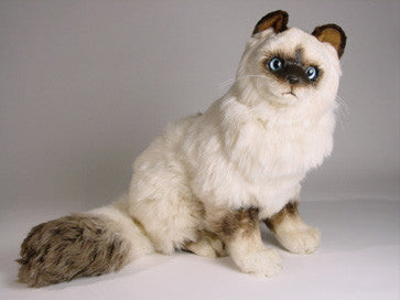 """Sinh"" Birman Cat"