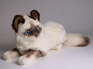 """Xenia"" Birman Cat"
