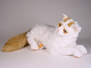"""Yumuk"" Turkish Van"