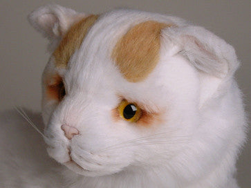 """Lushington"" Turkish Van"