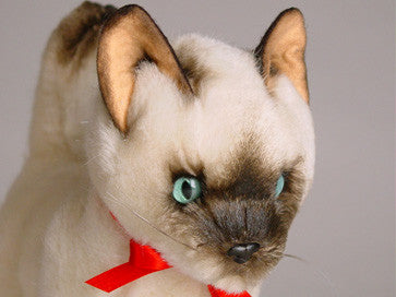 """Ling Ling"" Siamese"