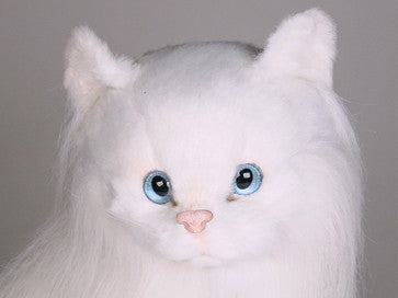 """Duchess"" Angora Cat"