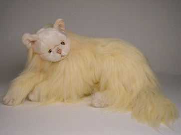 """Goldilocks"" Angora Cat"