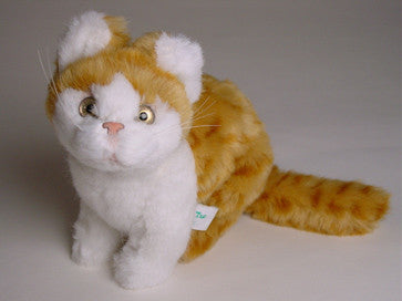 """Raggles"" Red & White Tabby Cat"