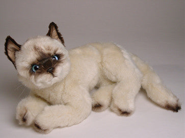 """Mrs. Poodles"" Siamese"