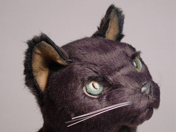 """Catarina"" Russian Blue"
