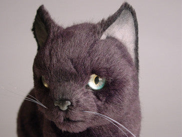 """Pushka"" Russian Blue"