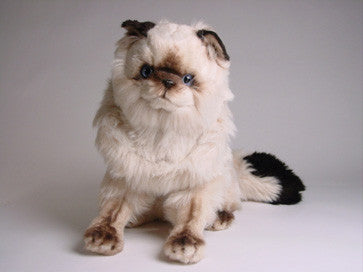 """Stewie"" Colorpointe Persian"